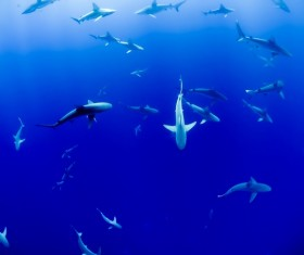 Deep blue sea cruising shark Stock Photo