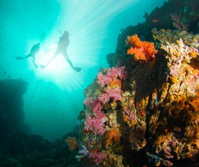 Divers and undersea coral reefs Stock Photo