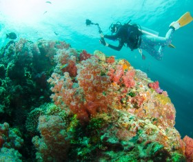 Diving enthusiasts underwater photography Stock Photo