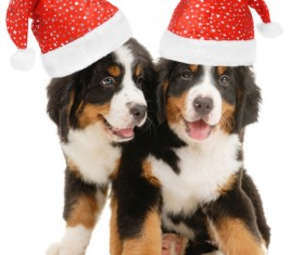 Dog with Christmas hat Stock Photo