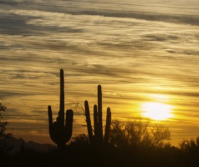 Dusk Sky Clouds with Cactus HD picture