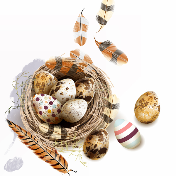Easter background with bird nest eggs and feathers vector 06