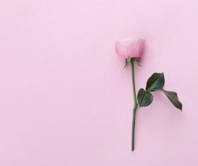 Flower with pink background HD picture