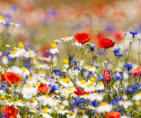 Flowers HD picture