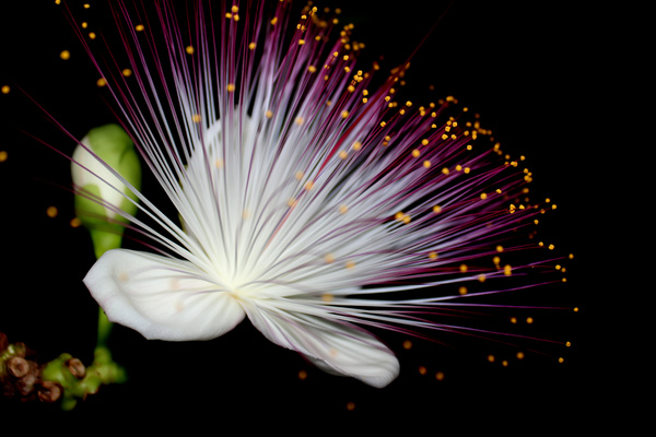 Flowers On Black Background HD Picture Free Download