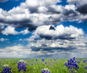 Flowers with thick clouds background Stock Photo
