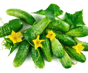 Fresh cucumber on a white background HD picture