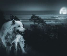 Full Moon Wolf Stock Photo 01