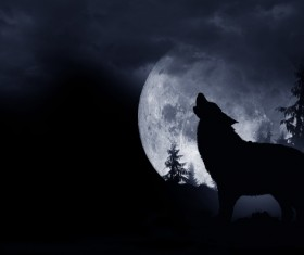 Full Moon Wolf Stock Photo 02