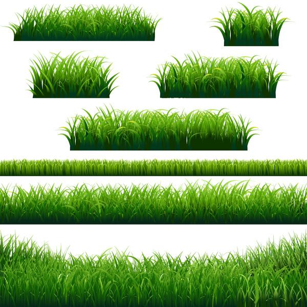 Green grass borders design vector material
