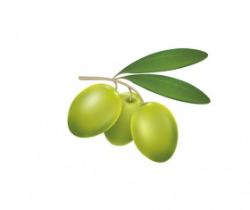 Green olives on a white background vector