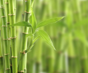 Grow the leaves of the green leaves Stock Photo