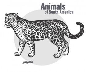 Jaguar hand drawing sketch vector