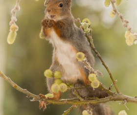 Lovely squirrels Stock Photo