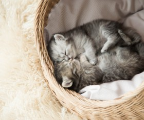Lying in the basket to sleep in the gray cat Stock Photo