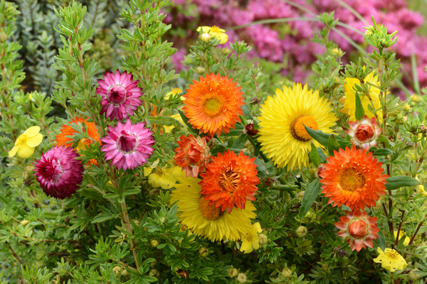 Nice Flowers HD Picture Free Download