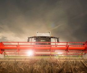 Night harvest Stock Photo