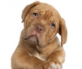 Not happy puppy Stock Photo
