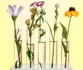 Nutrient solution culture flowers HD picture 02
