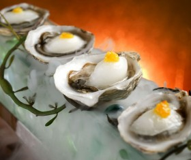 Oysters HD picture