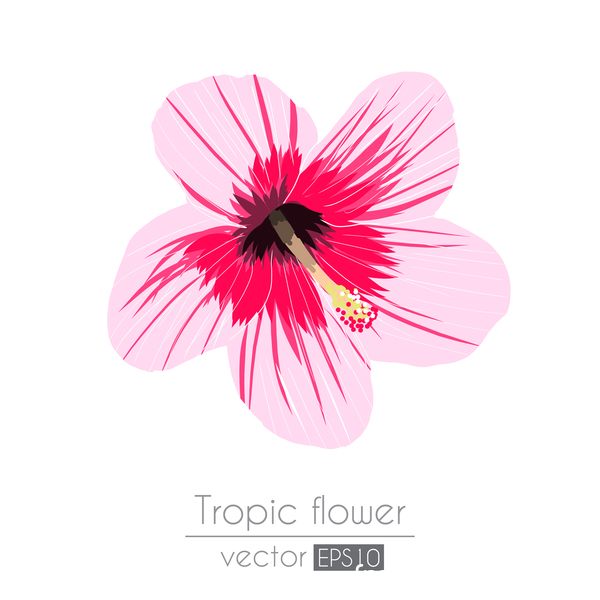 Pink tropical flowers vector material 01 vector flower free download pink tropical flowers vector material 01 mightylinksfo Images