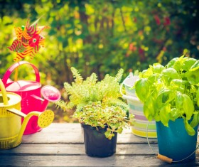 Potted plants on the table and pots HD picture