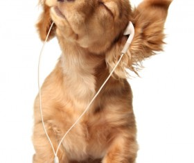 Puppies with headphones Stock Photo
