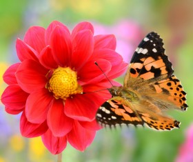 Red beautiful flowers with butterflies HD picture