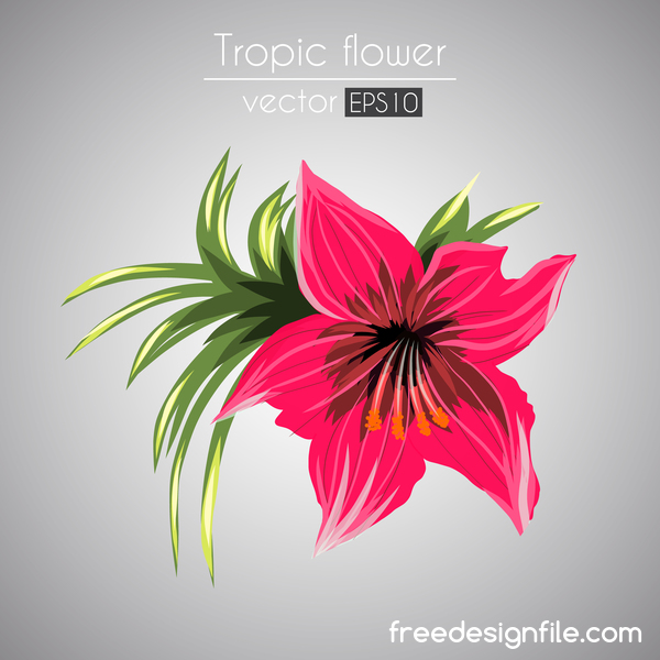 Red tropical flower with leaves vector