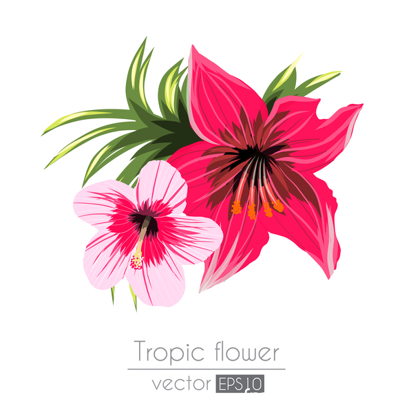 Red with pink tropical flowers vector 04