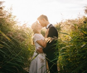 Reeds intimate lovers Stock Photo