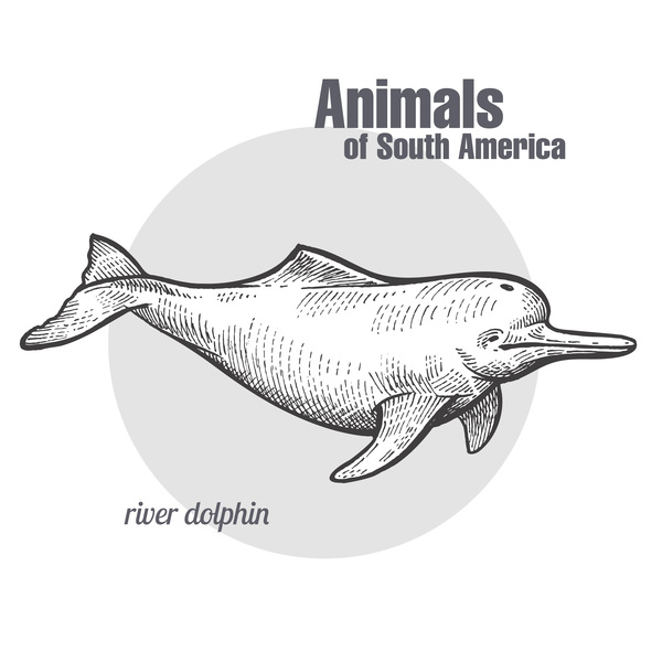 River dolphin hand drawing sketch vector