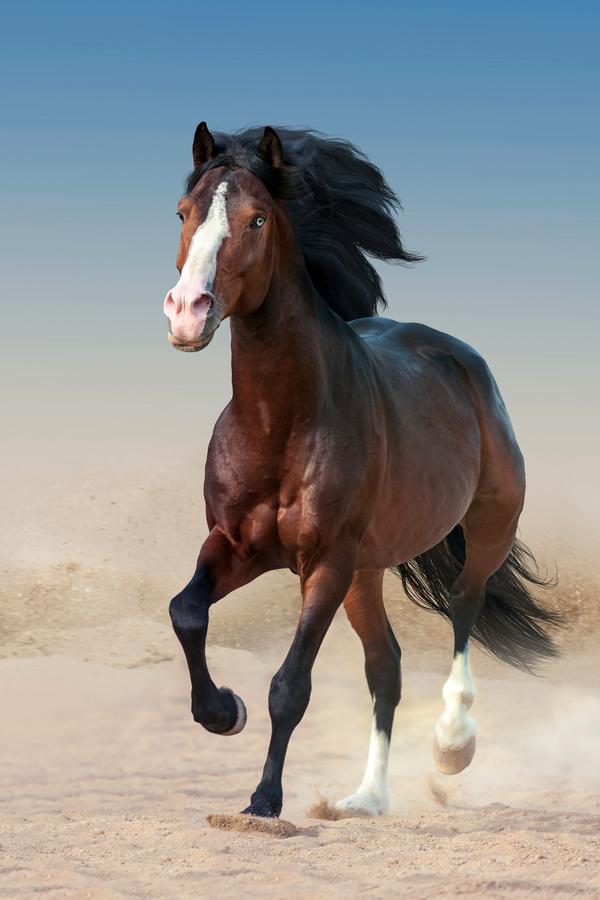 Running the horse Stock Photo 04