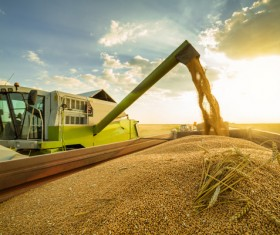Self-propelled round-fed combine harvesters Stock Photo