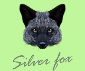 Silver fox head vector illustration 01