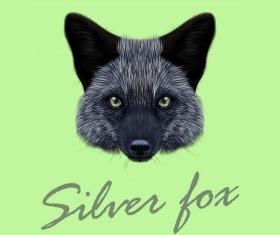 Silver fox head vector illustration 01