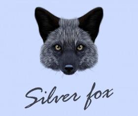 Silver fox head vector illustration 02