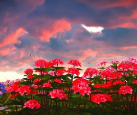 Sky clouds with red floral plants Stock Photo