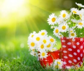 Small fresh white chrysanthemum Stock Photo