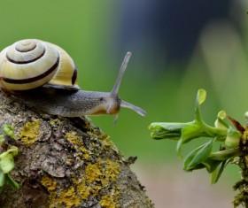 Small snail Stock Photo