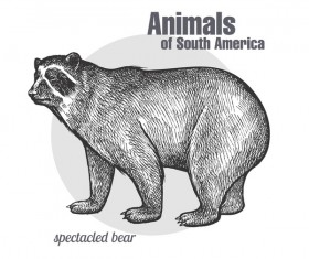 Spectacled bear hand drawing sketch vector