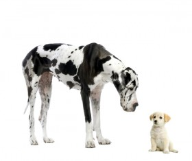 Spotted dog and puppy Stock Photo