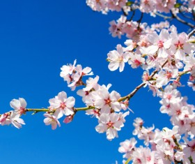 Spring beautiful flowers HD picture 04