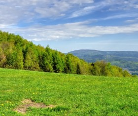 Spring green meadow and forest hills Stock Photo 03