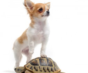Stepping on puppies turtle Stock Photo