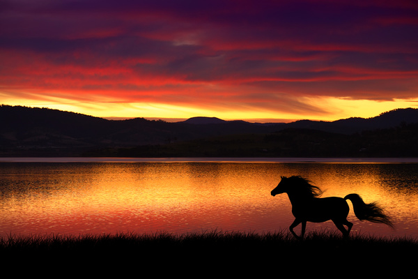pics of horses running by the sunset pictures to pin on