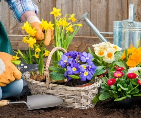 Take care of the flowers in the basket Stock Photo
