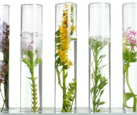 Test tubes are cultivated with nutrient solution HD picture