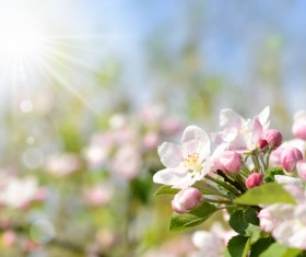 The flowers in full bloom in the sun HD picture