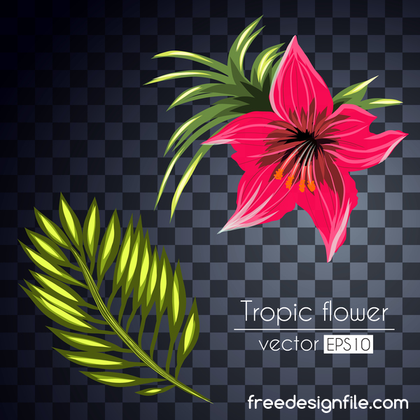 Vector tropical flowers illustration vector 01